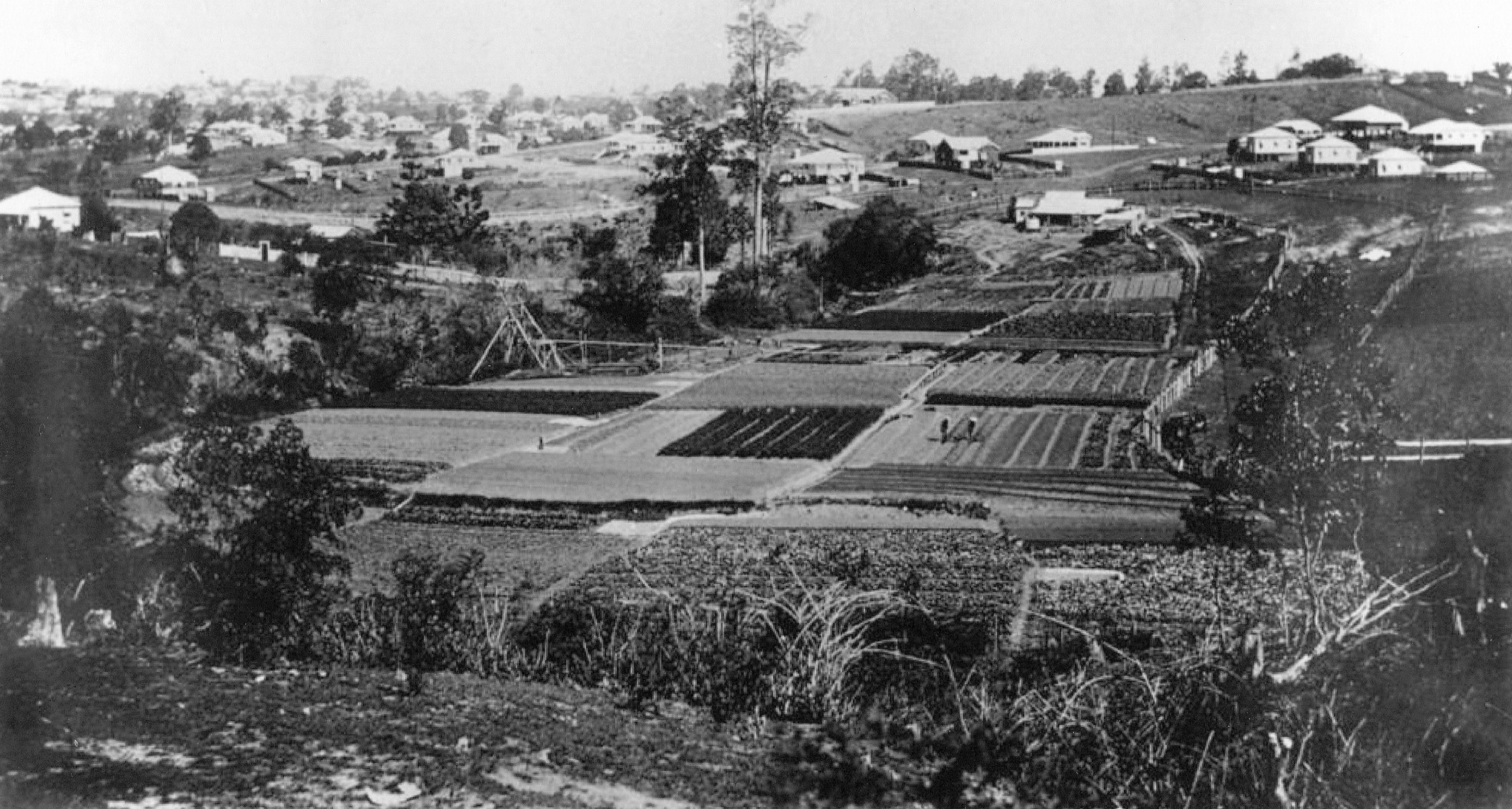 AS2 Chinese market gardens 1914